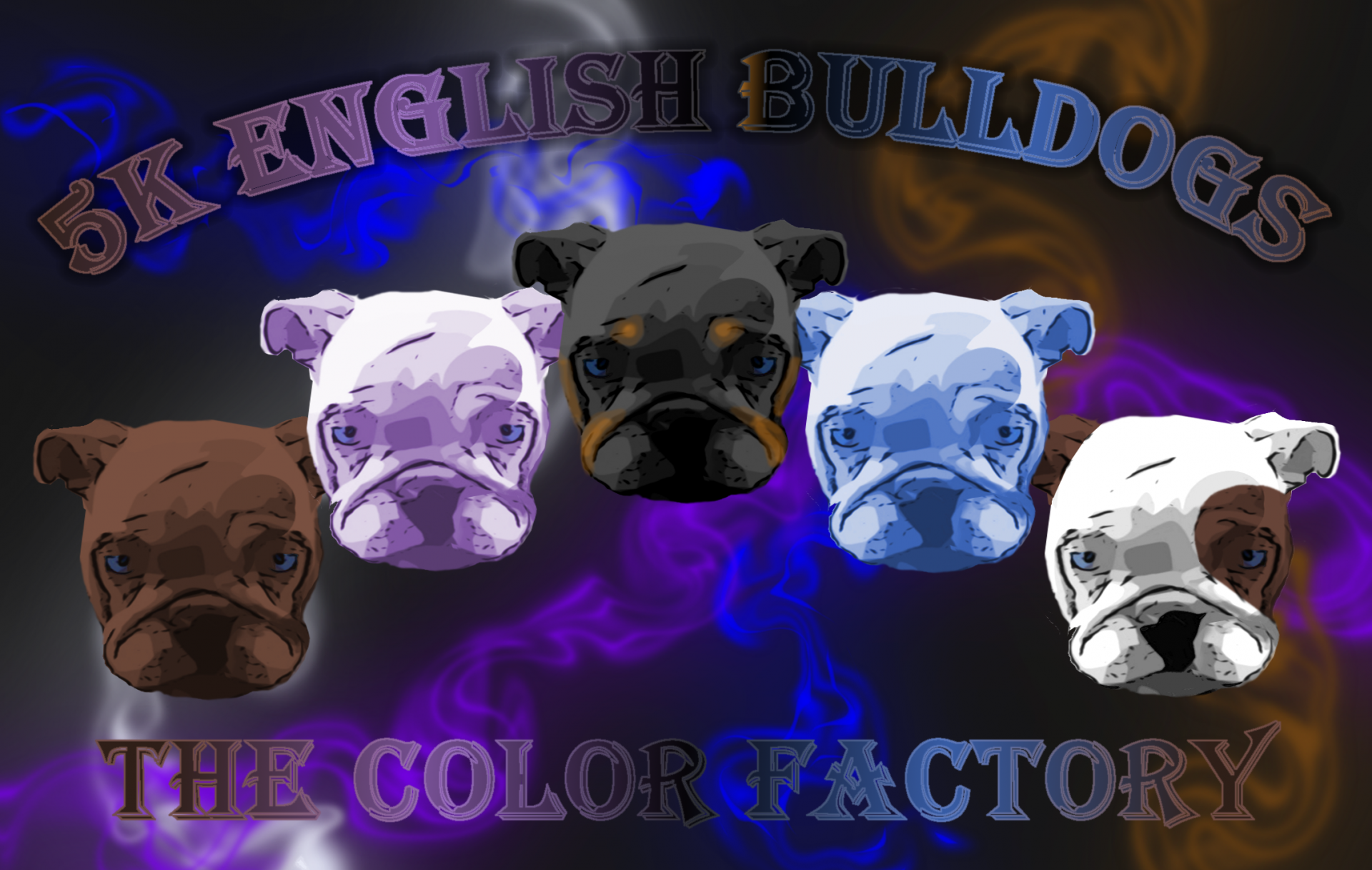 AKC Rare Color English Bulldogs-Lilac-Blue-Chocolate-Black-Mini-Merle English Bulldogs